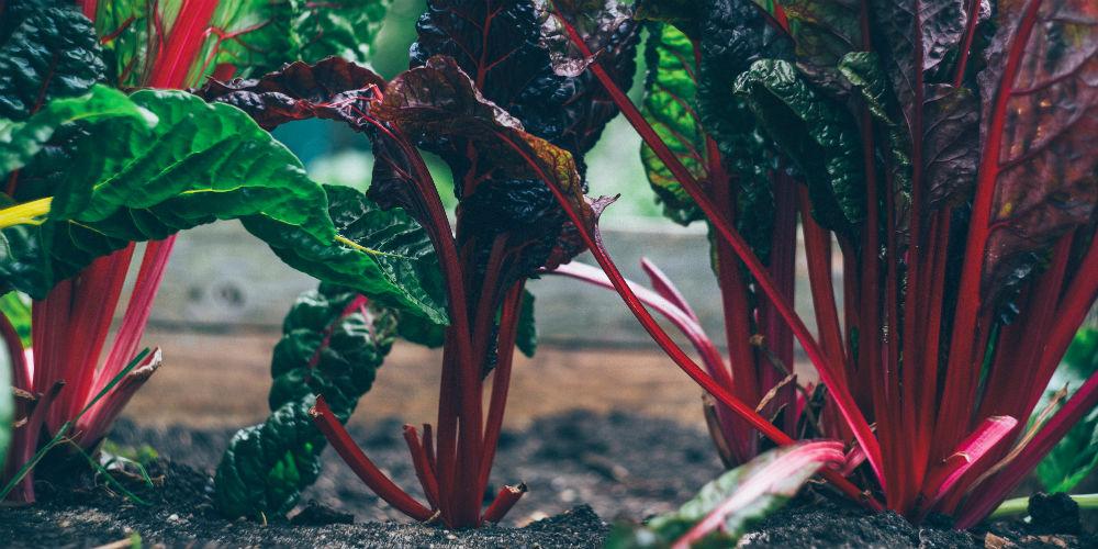 grøntsager kan også være skidt for miljøet